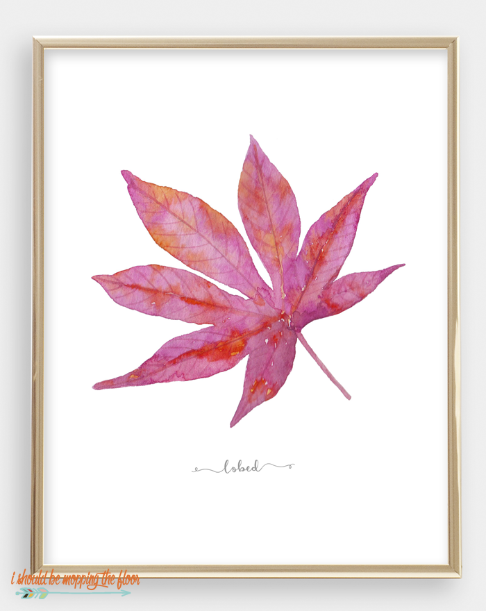 printable leaf study.png